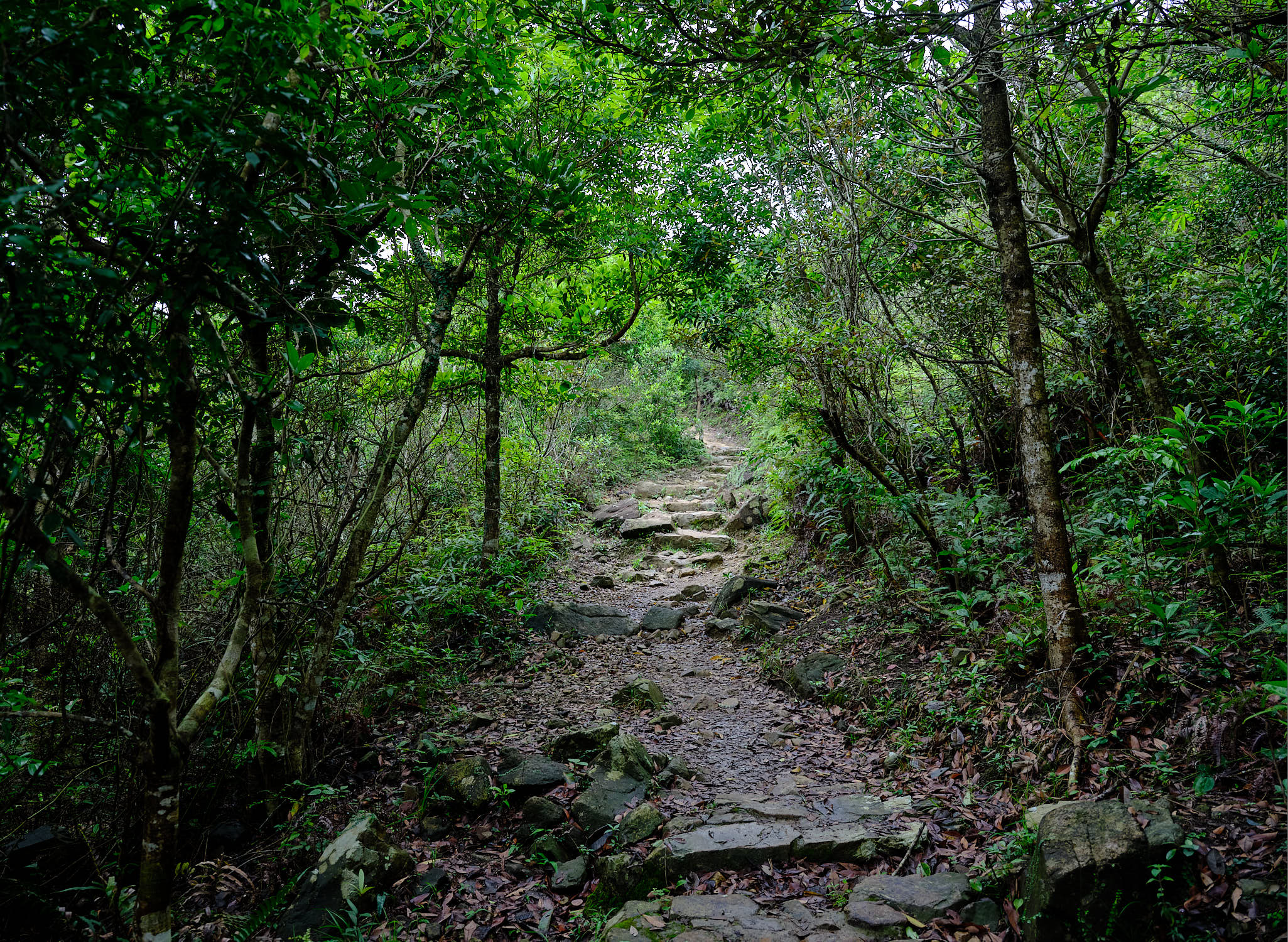 MacLehose Trail Stage 3