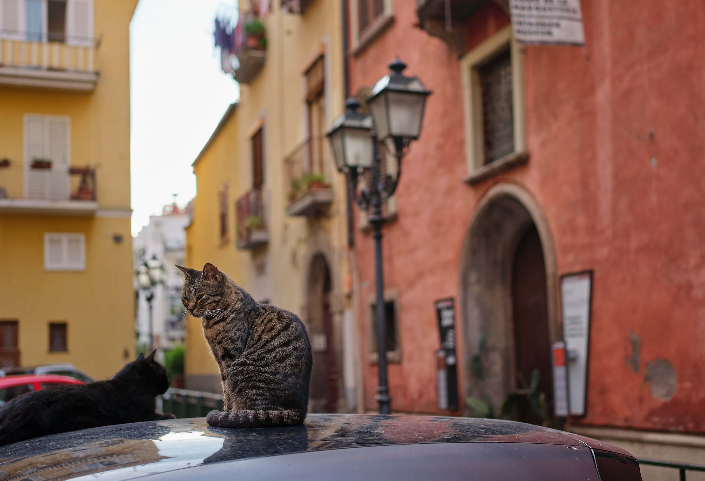 Cat in Sorrento, Italy