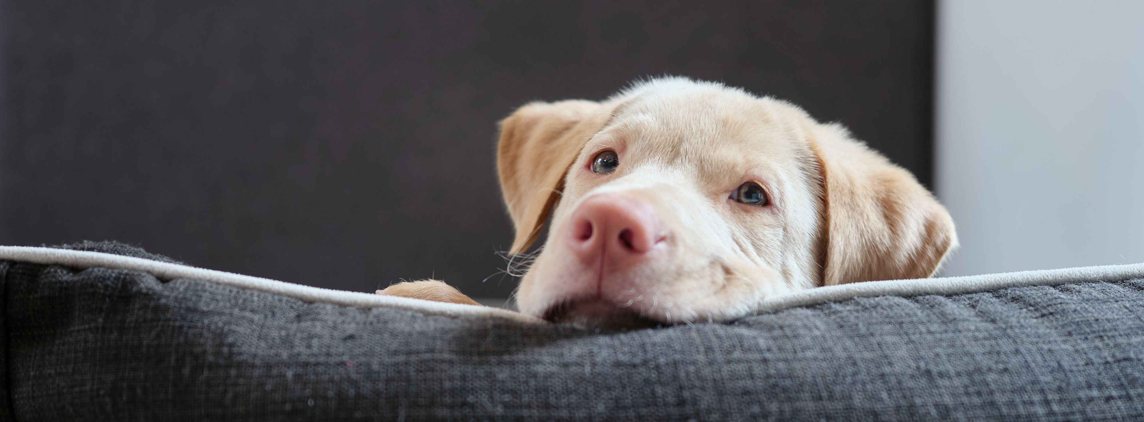 Rescue puppy from Hong Kong
