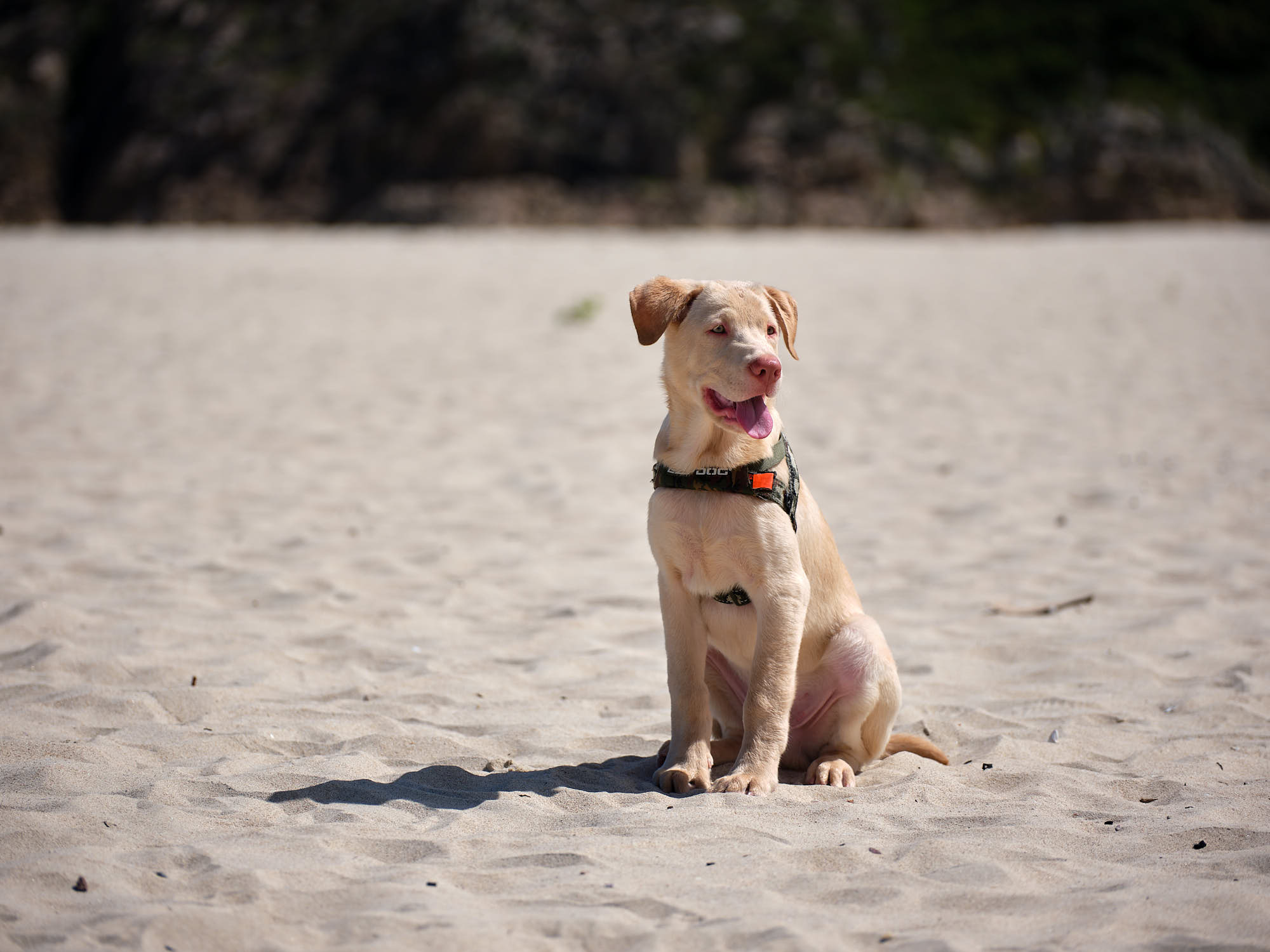 Oliver, our new New Territories rescue puppy at the beach