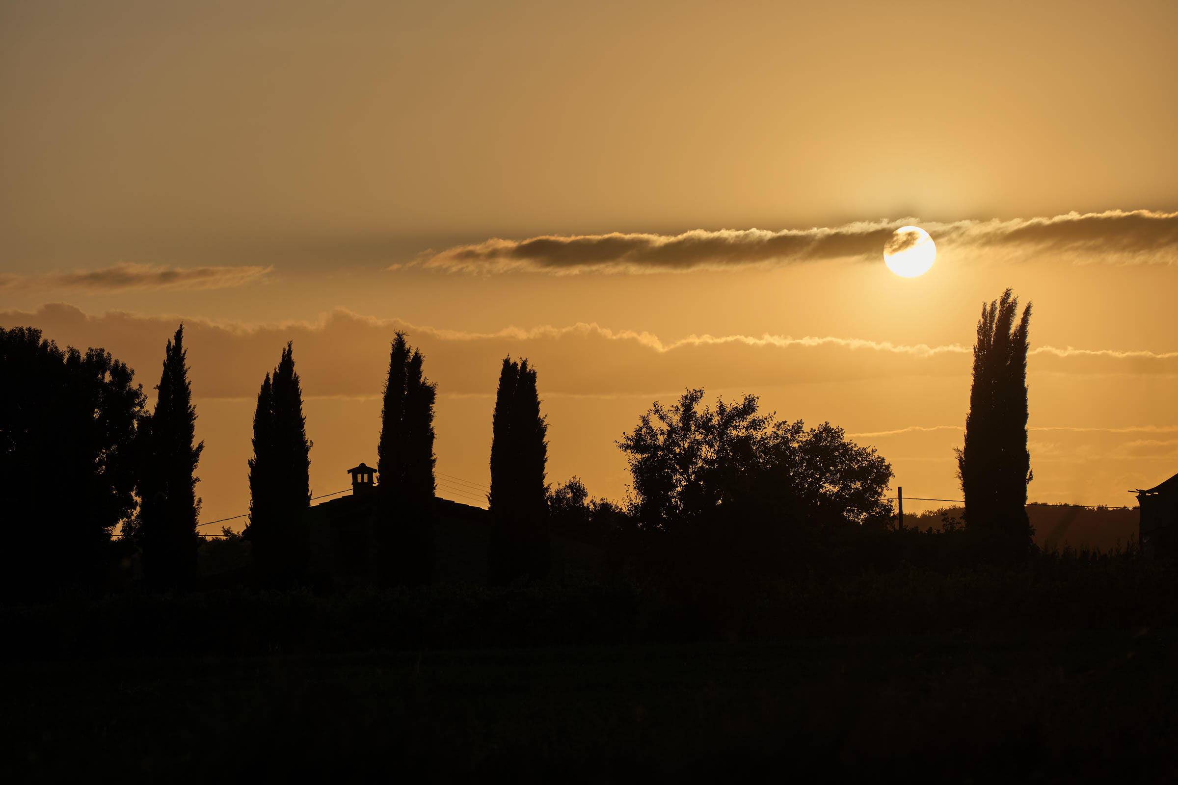 Cypress trees, Val d\'Orcia, Tuscany