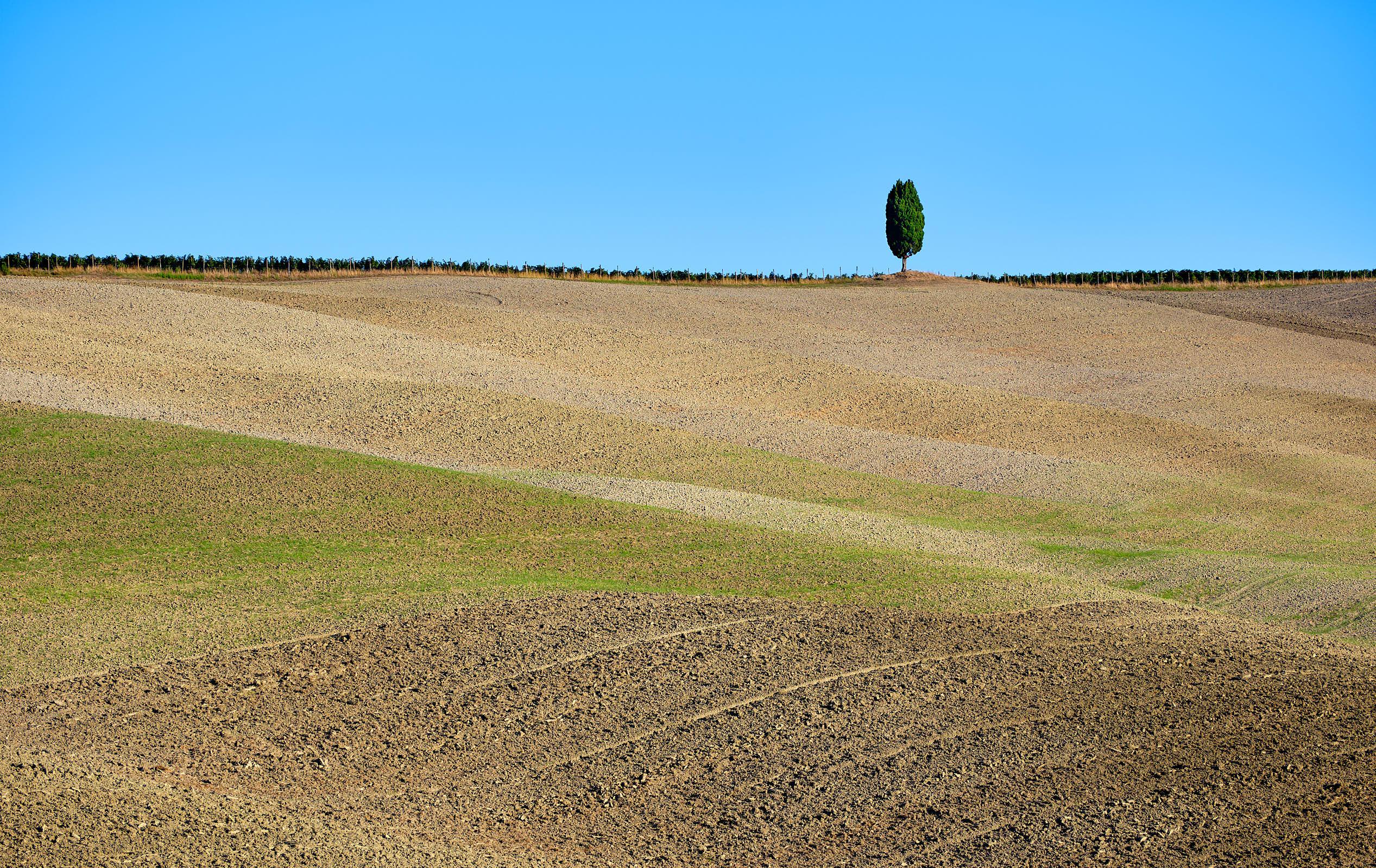 Single cypress tree, Val d'Orcia, Tuscany