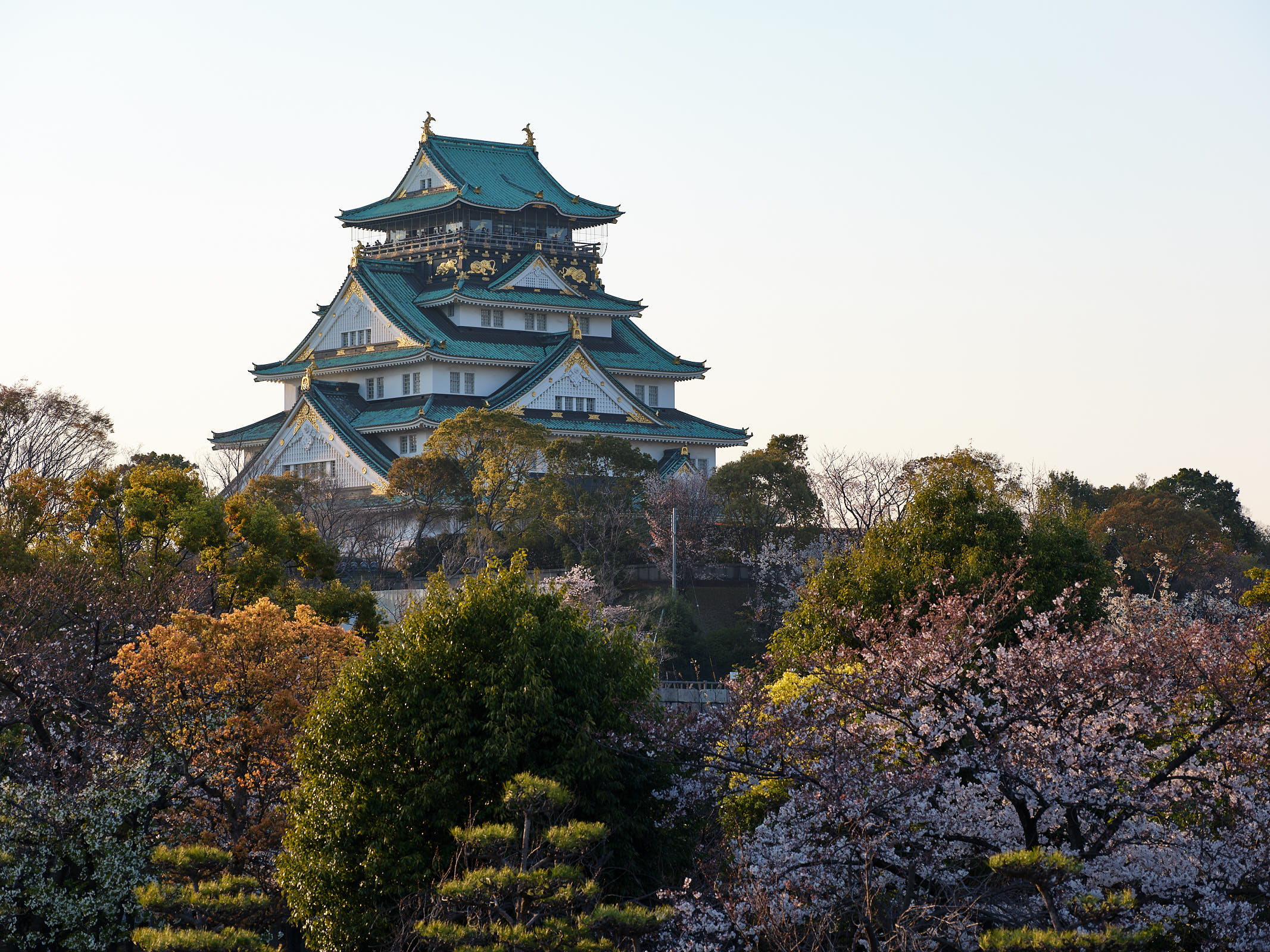 Osaka Castle during Sakura Festival