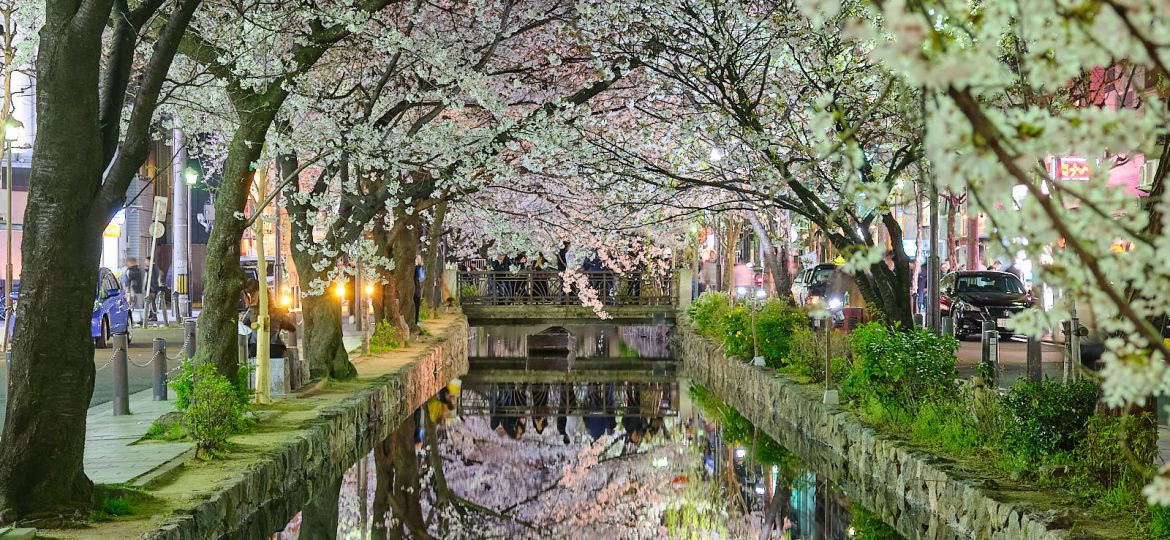 Streets of downtown Kyoto, Japan during peak Sakura