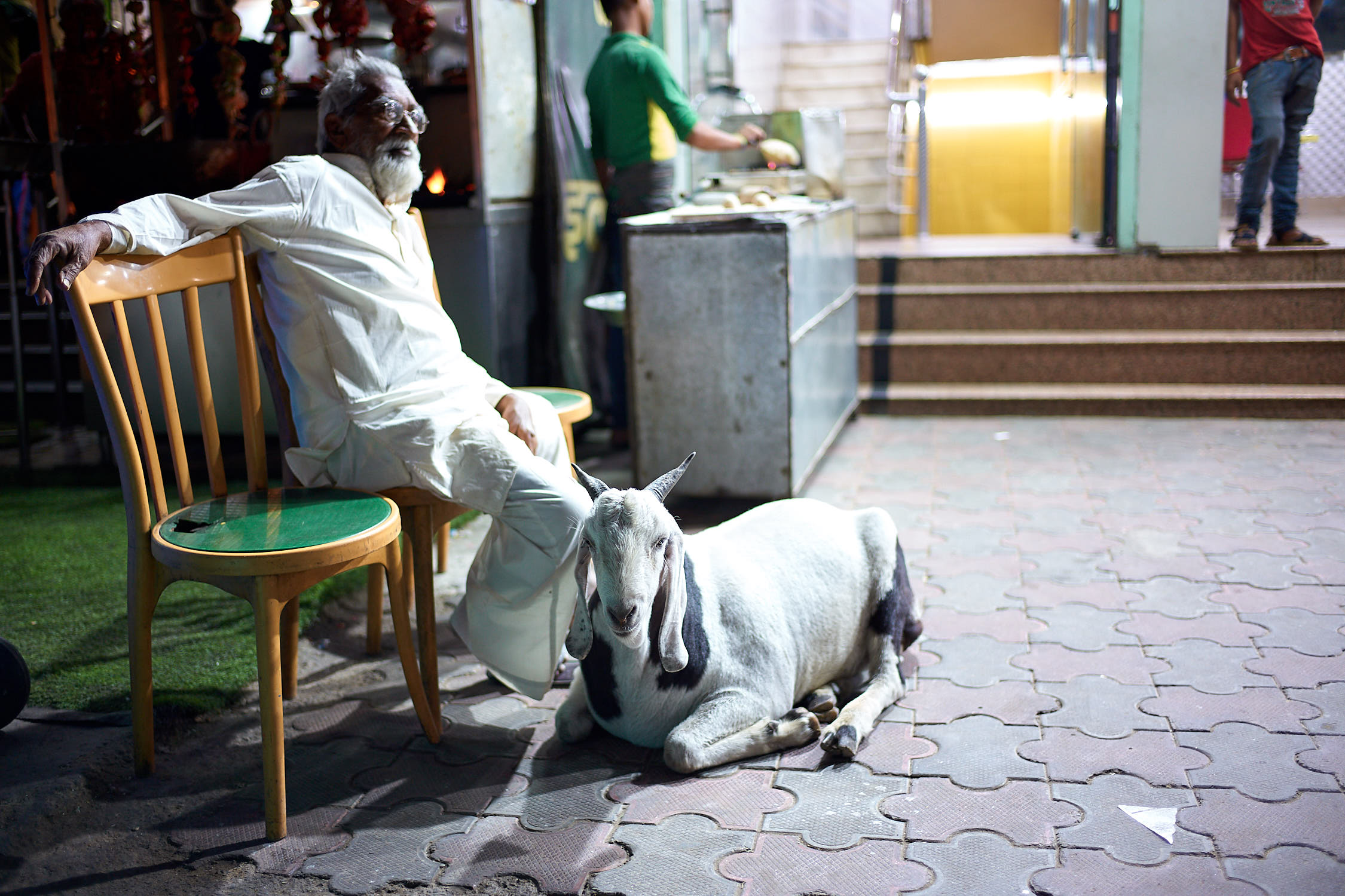 Goat on the streets of Jaipur, India