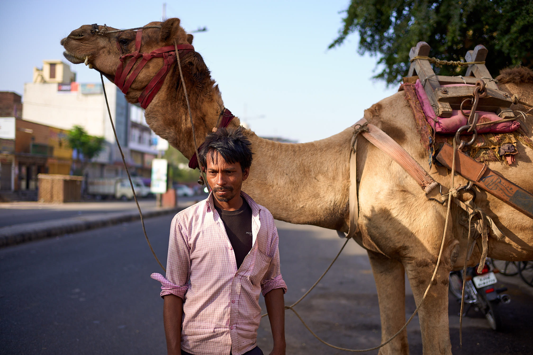 Man with a working camel in Jaipur India