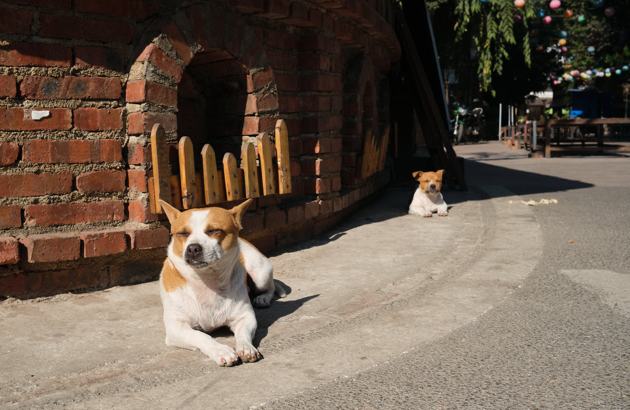 Dogs in Xishuangbanna